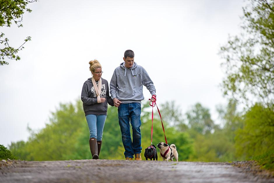couple walking pugs
